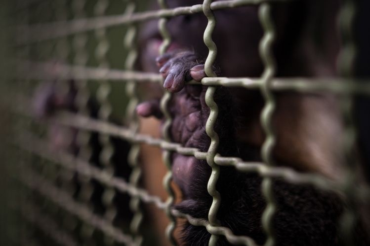 و- قاچاق حیوانات